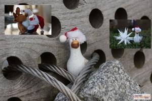 Weihnachtsmoewenreise13_6